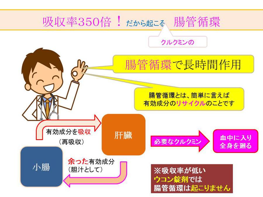 腸管循環図@29